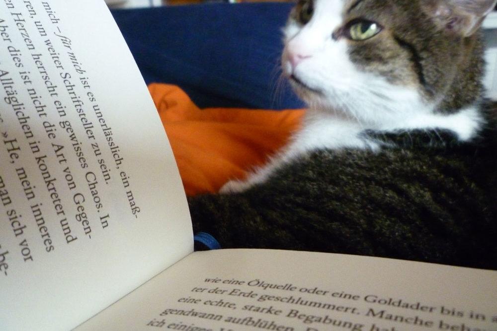 Buch mit Katze