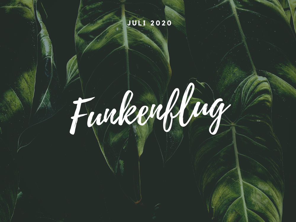 Bild in dunklen Grüntonen mit Palmenblättern als Symbolbild für Monatsrückblick Juli 2020